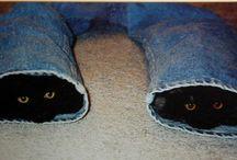 Kitty Kats  / by Judy Barth