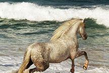 Horse  love ♥♥♥