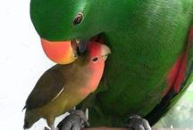 parrots and birds