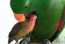 Birds (especially parrots)