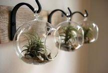 bulles de plantes