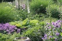 Grasses Perennials & Meadows / Ornamental grasses, perennials that look great with them & meadow style planting