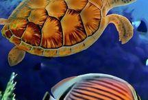 ...OCEAN'S LIFE...!!
