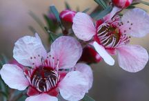 Our Native Australian Plants / Native Australian trees, shrubs and flowers to add colour to your garden, and attract wildlife. Water-wise, easy care, low maintenance.