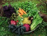 Grow your own food / Gardening tips why it's important to be self sufficient.