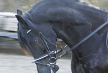 Horses / Foto's van mijn Dochter en haar paard!