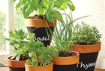Ideas jardinería
