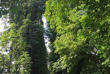 Widoki w Polsce / Zdjęcia, czego pytacie? Miejsc ładnych, pięknych i czarująco uroczych.