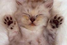 kociaki / słodziak