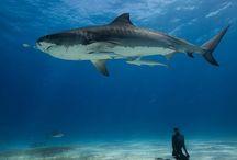 Spearfishing & Freediving
