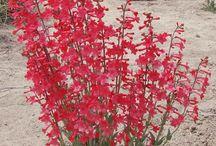 drought tolerant plants Utah