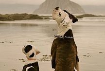 Doggies! / by Victoria Callas