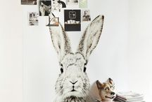 Bunnies / lapin bunny