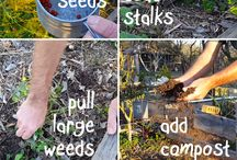 Tips for Grow Asparagus / Board dedicated to the world of growing asparagus!