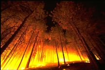 You Can Survive a Wildfire / Learn how to survive a wildfire. What to do and how to deal with the situation