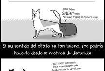 Animalitos <3