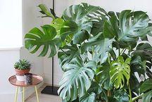 Indoor plants-İçmekan bitkileri