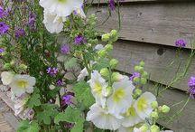 tuin / een lange smalle tuin inrichten