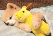 cute :) / cute animals aww