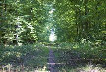 Nature et paysage / La nature, de beaux paysages, des jolies fleurs : de vraies sources d'inspirations chaque jour !