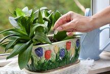 élesztős víz növényeknek