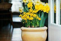 gardening pots