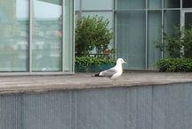 Stemningsbilleder fra Odense havn / havnen set fra skæve og sjove vinkler