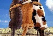 ♡   Смешные домашние любимцы    ♡