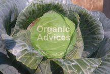 Organic Farming / Organic farming In India