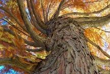 Magnificent trees / Beautiful shots of beautiful beings