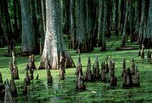 landscapes references swamps