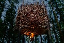 Nest related