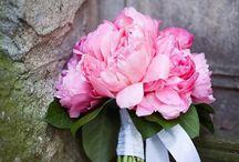 csokros virágok