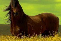 Saddle Up / by Melissa Behm