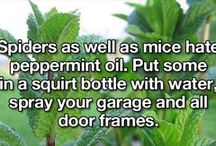 Deterrent for spiders and mice