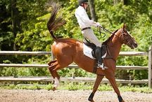 Bucking horse / If your horse is bucking a lot, it doesn't mean, your horse is wild. It could be sick or it could feel pain. So put that on mark.