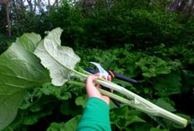 vegetables we normal dont eat