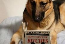 The girls / Pups / by Bonehead Abba Zabba