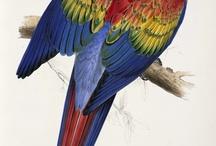 Sept Oiseau