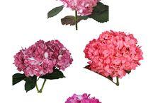 flower choices