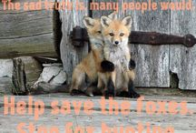 Wildlife rights / Spread the word, stop the cruelty.  From hunting to fur farming, these beautiful animals are tortured by humans everywhere.
