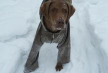 Winter's Pets