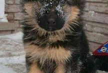 ☆German Shepperd☆