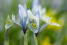 makro / close-up photography
