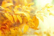 My work / Fotografía variada, Photography nature, photography textures