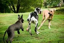 Puppy Dogs! / by Ashley Baxa Haley