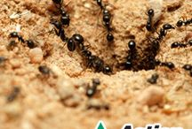 Blogs About Bugs / The latest information on frustrating pest control problems.