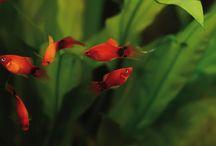 Pesci - Fishes / Wonderful Nature