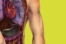 #anatomicalillustration | Anatomical Illustration / #anatomicalillustration #illustration #body #head #anatomical