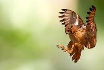 Photography I like: Wildlife